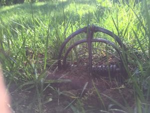mole trap, mole trapping